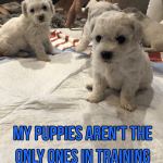 My Puppies Aren't the Only Ones in Training!